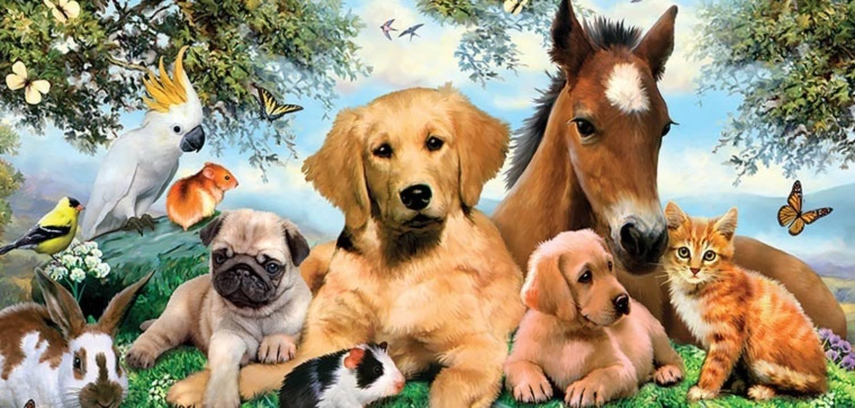 Pets Website Design @ Rs. 5900 - Low Cost Pets Store ...