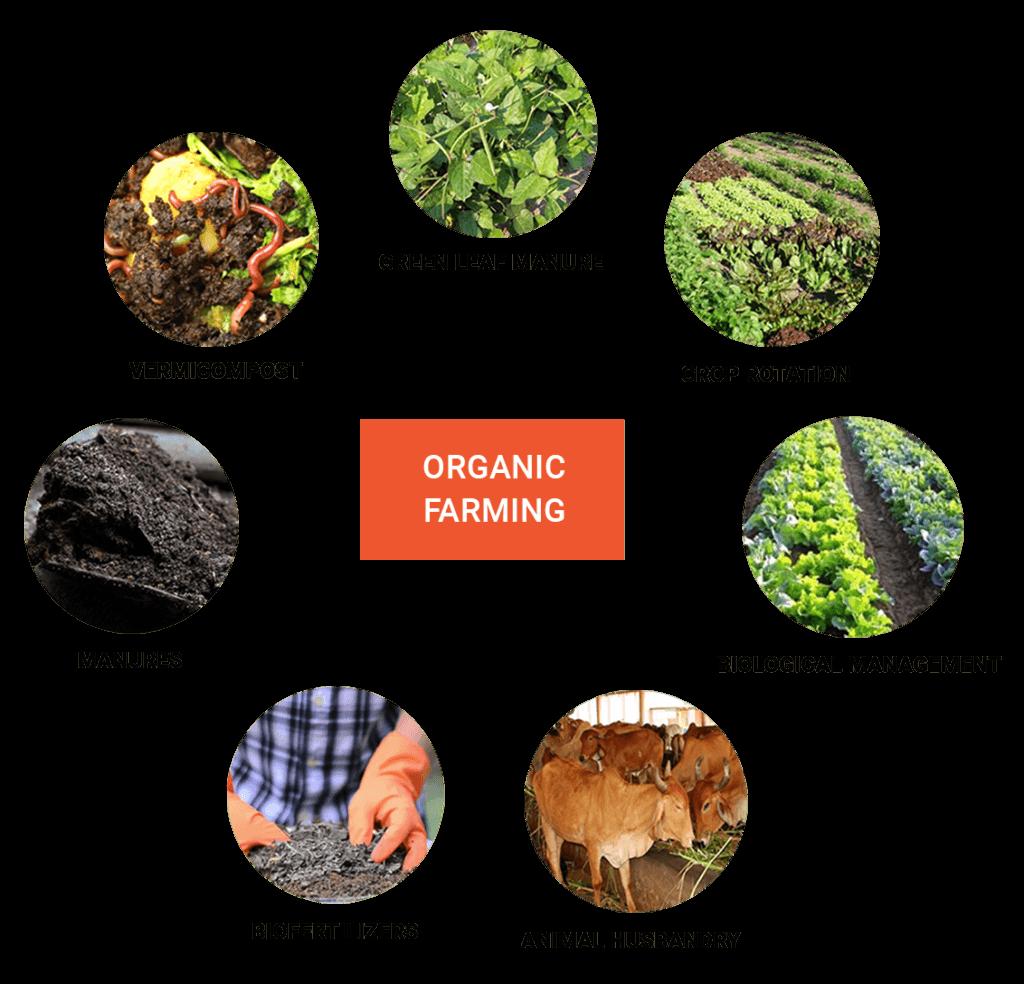 Organic Farming Website Design @ Rs. 5900 - Organic Farm Website Development Company Near Me