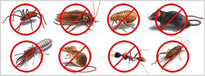 Pest Control Website Design @ Rs. 3800