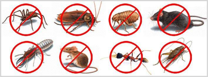 Pest Control Website Design @ Rs. 3800